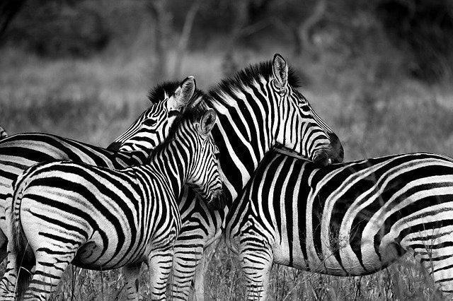 Don't Be a Zebra in a Herd of Zebras. featured image
