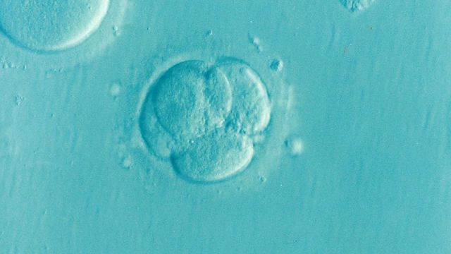 Fertility clinics under the microscope featured image