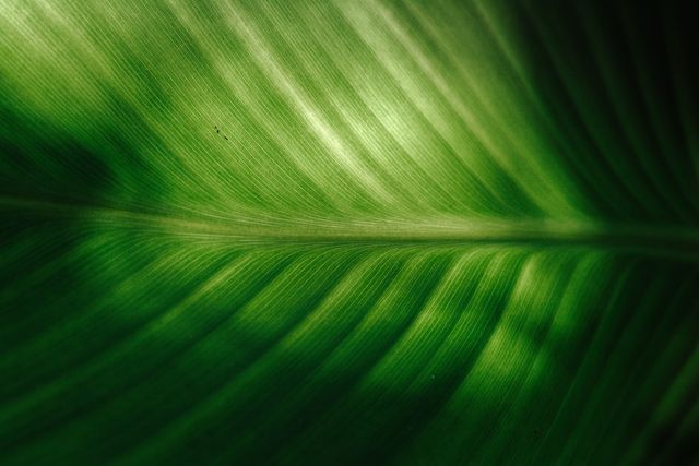 Providing Clarity for Green Financing featured image