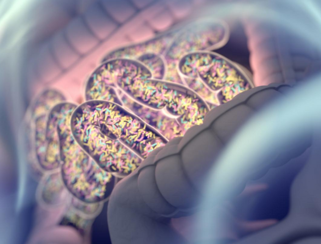 Can we now blame our gut bacteria for those extra pounds? featured image