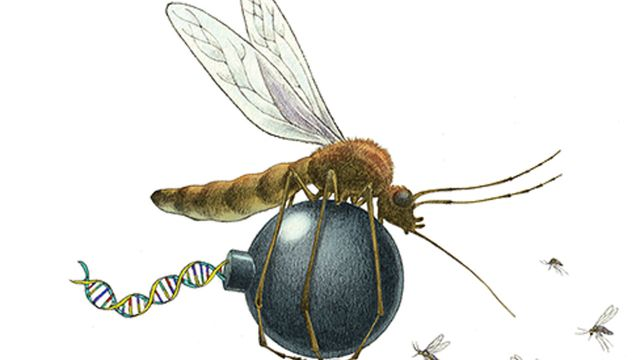 Is it a fair allegation that using gene drives is equivalent to playing God? featured image