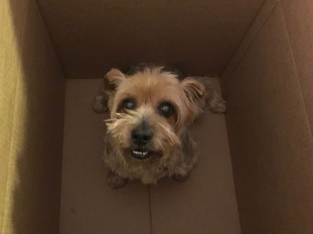 FTC Highlights Concerns About Leasing . . . of Pets featured image