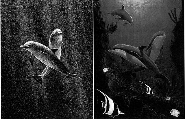 Who Doesn't Love Dolphins? featured image