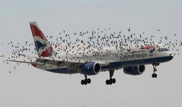 """GDPR Woes Take Flight: British Airways Asks Customers to Tweet Their Personal Information in Misguided Attempt to """"Comply"""" with GDPR featured image"""