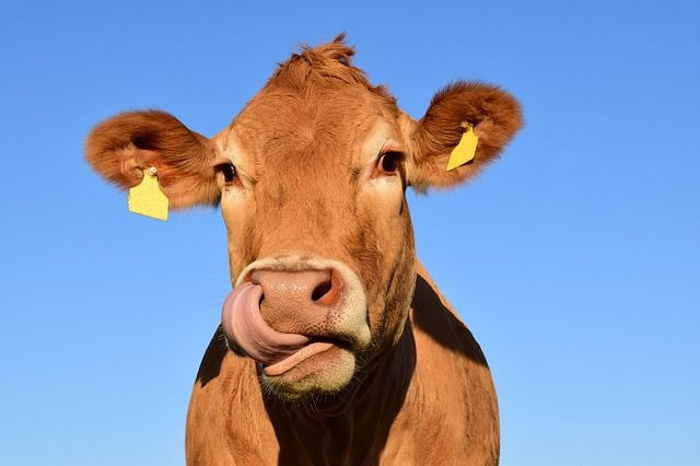 How Do You Tell A Cow From An Almond? featured image