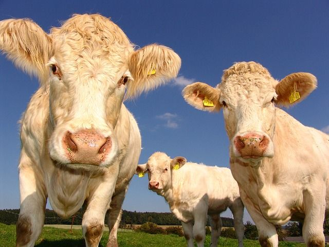 DO Consumers Know The Difference Between An Almond and A Cow? featured image