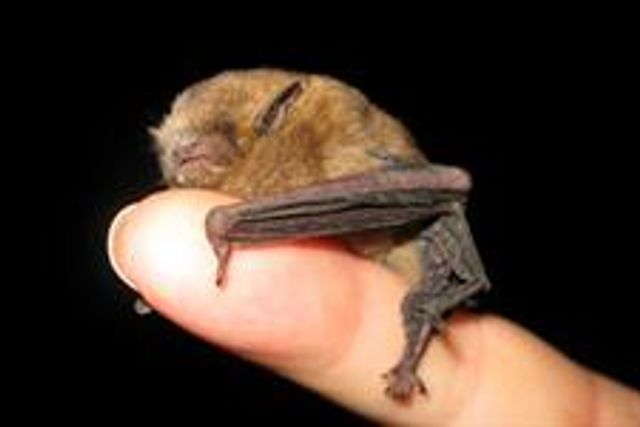 Thinking of ignoring environmental laws?  Don't be batty. featured image