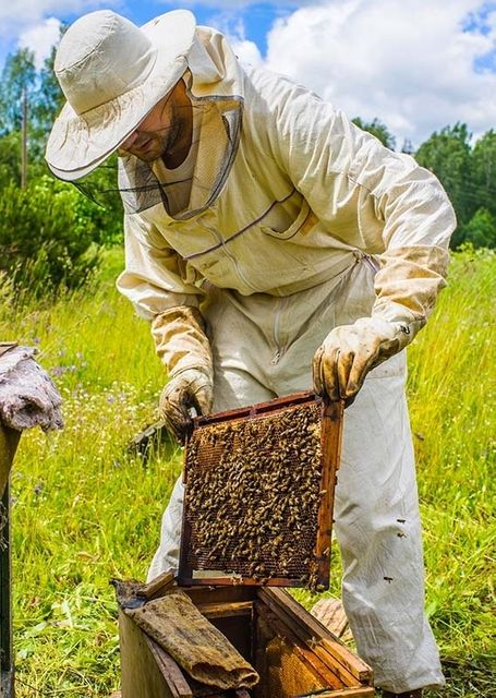 Taking the sting out of settlement: love of bees helps resolve trade mark conflict featured image