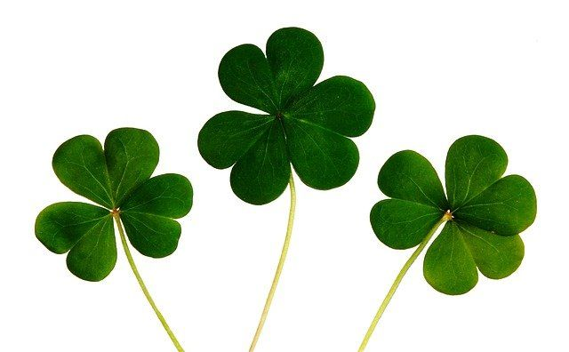"""Quiz: Do you have the """"Luck of the Irish""""?☘️ featured image"""