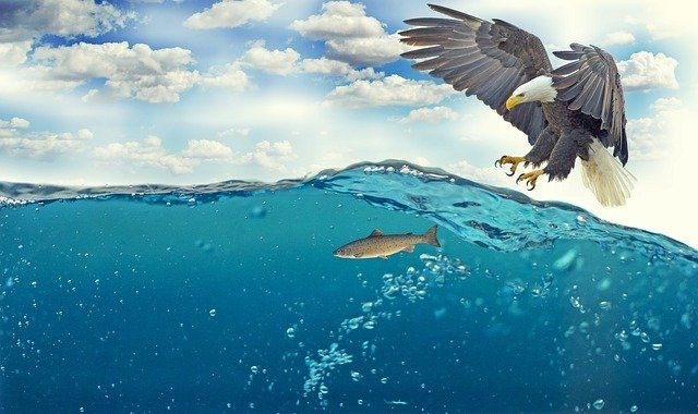 Plenty more phish in the sea? Cyber risks for SMEs in the supply chain featured image
