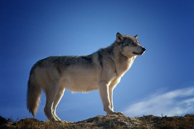 """""""Wolf warriors"""" at the gate: the rise and rise of foreign investment protection featured image"""