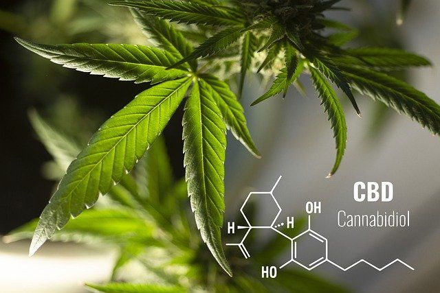 Sale and advertising of CBD products in Slovakia featured image