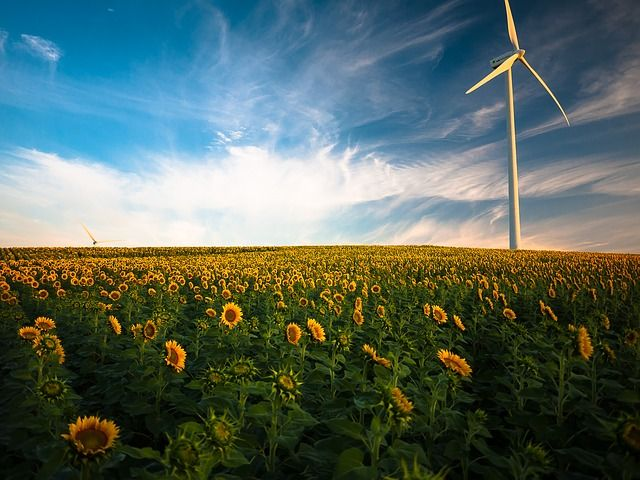 The UK's net zero carbon target - challenge or opportunity? featured image