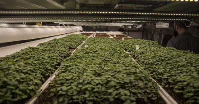 The only way is up - is the future of healthy, sustainable food in vertical aquaponic farming? featured image