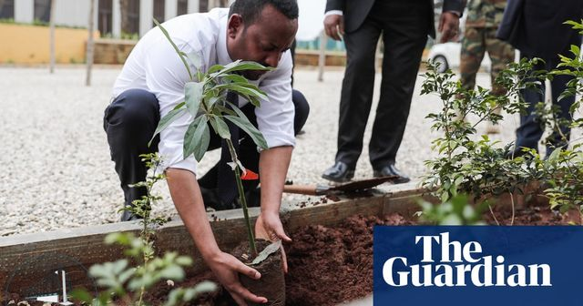 Ethiopia plants 353 million trees in one day featured image