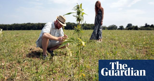 Hemp crops destroyed by Home Office Order featured image