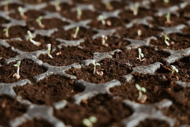 Farming goes digital - the rise of Impact Investment in Agtech featured image