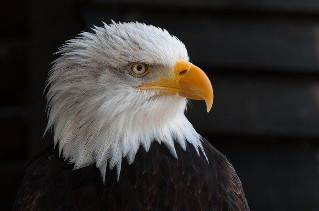 Break Up of Conservative Political Group Eagle Forum Does Not Mean Trademark Infringement for Founder's New American Eagle Group featured image