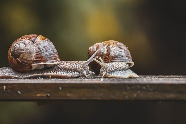 Snail farms and other slow moving business (rates mitigation schemes) featured image