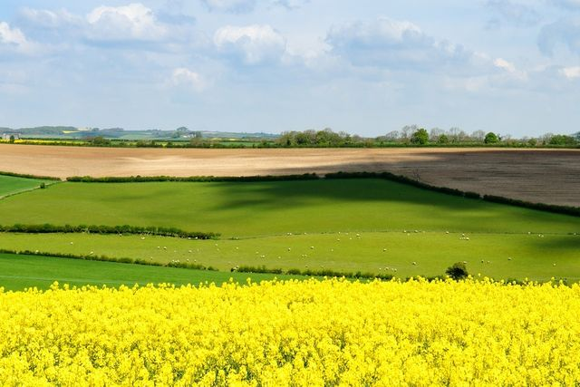 Time for farmers and land managers to apply for Countryside Stewardship agreements to help protect and improve the natural environment featured image