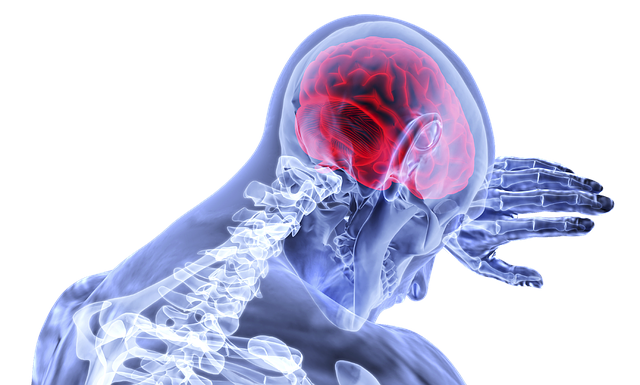 New study into whether damage to the white or grey matter after brain injury has the greatest impact on cognition featured image