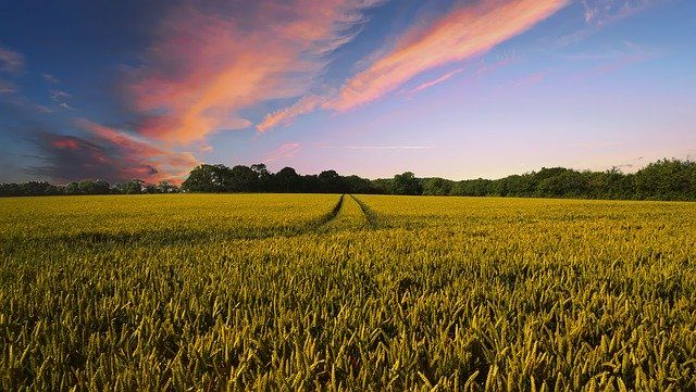 Shaping the future of farming in England featured image