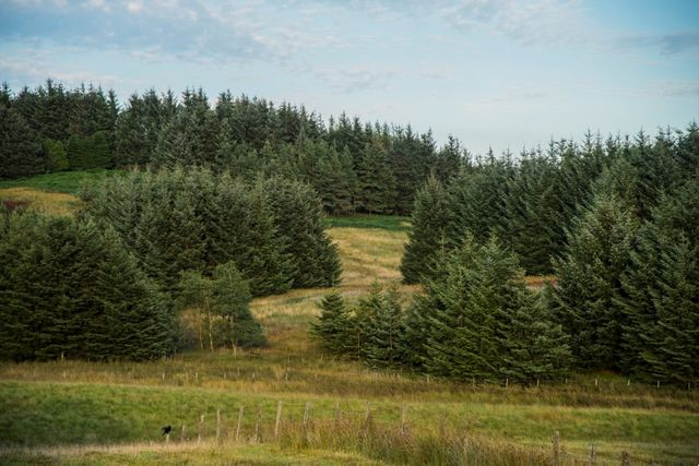 Woodland Carbon Guarantee - application deadline approaching featured image