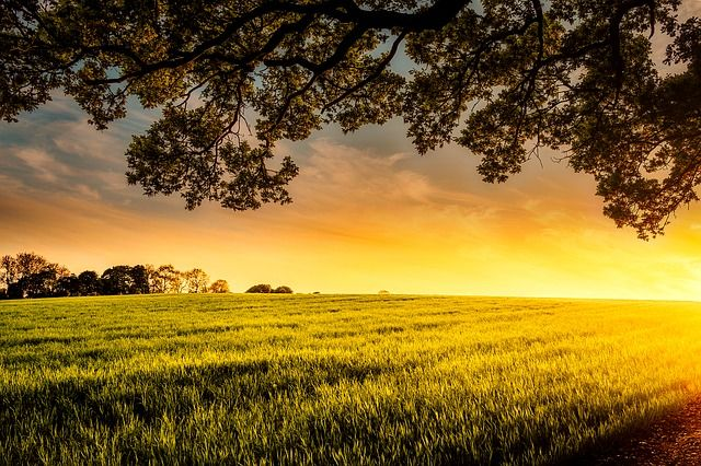 Agricultural Transition - How will proposals for a lump sum exit scheme affect a landlord's Farm Business Tenancy negotiations and drafting? featured image