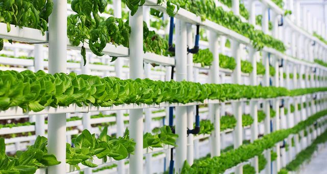 The Big Build Up: construction of vertical farms featured image