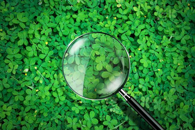 Better transparency through ESG reporting standards, despite COVID-19 featured image