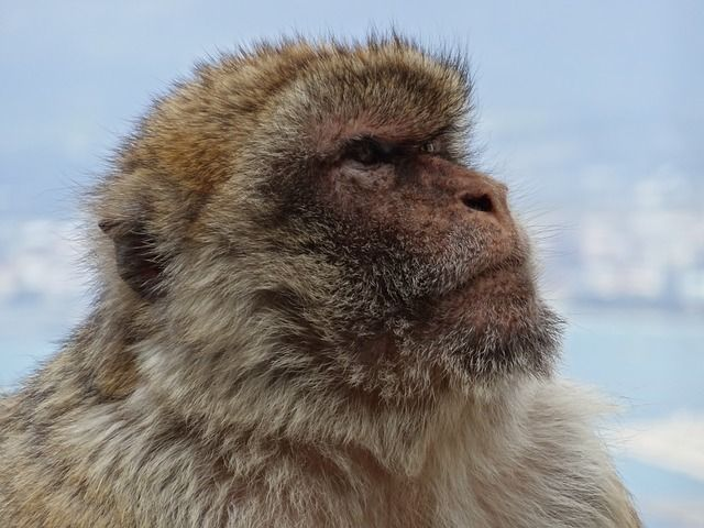 Gibraltar – Small But Mighty featured image