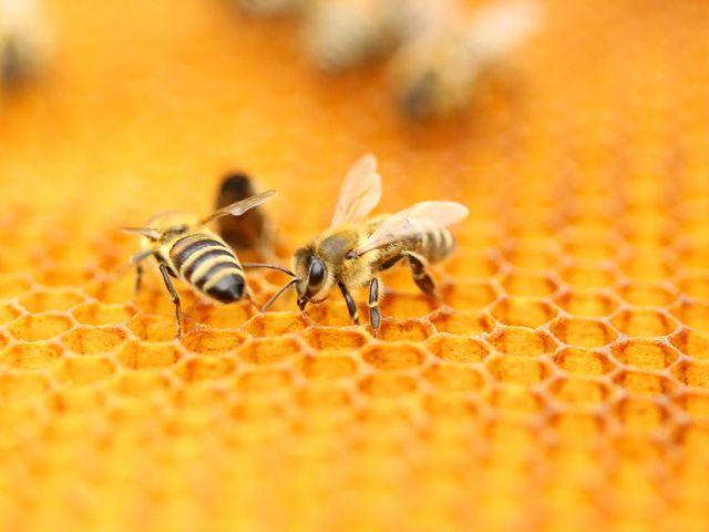 Beekeeping is booming in Berlin! featured image