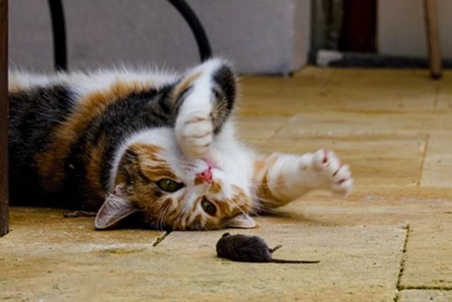 A game of cat and mouse featured image
