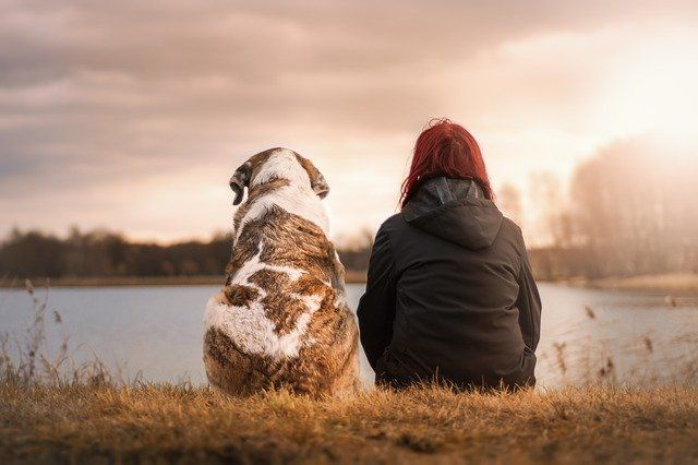 Pets and divorce: who keeps the dog? featured image