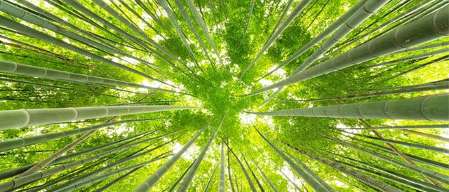 """Putting the """"eco"""" into economics: small steps in the right direction for green collaboration between business? 
