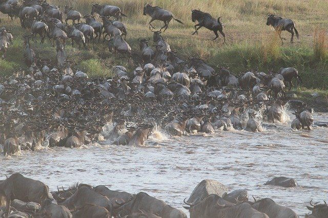 Pollutants, Storm Water, the Clean Water Act and Wildebeests featured image