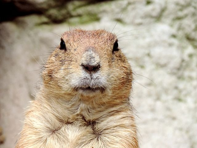 Groundhog Day -- More Supreme Court Clean Water Act Decisions? featured image