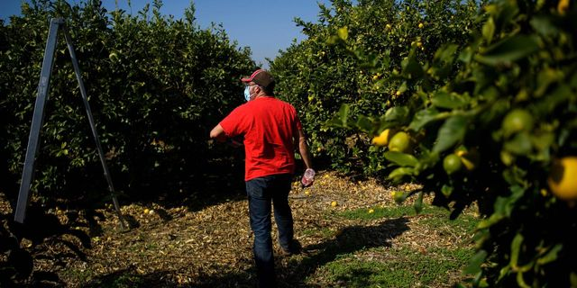 Supreme Court Strikes Down California's Regulation Allowing Union Organizers to Access Agricultural Fields featured image