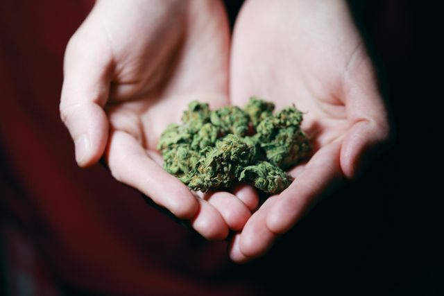 Should Cannabis Be Utilized in Workers' Compensation? featured image