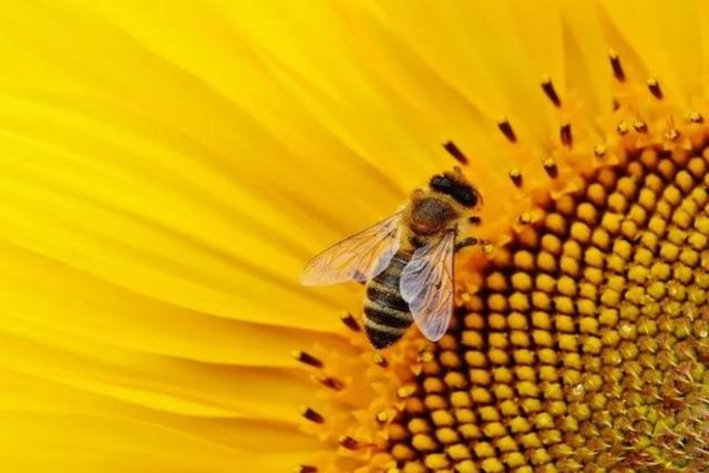 Vaccine for honeybees featured image