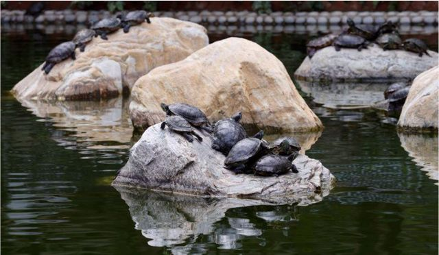 Hong Kong volunteers aid injured turtles after 'mercy release' featured image