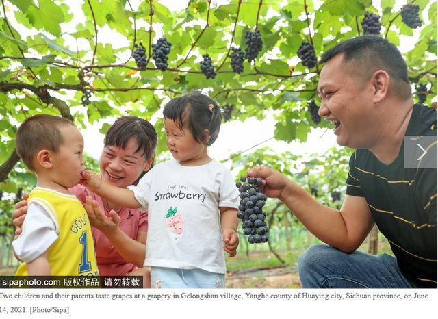 Fruit sweetens up city's economy in SW China's Sichuan featured image