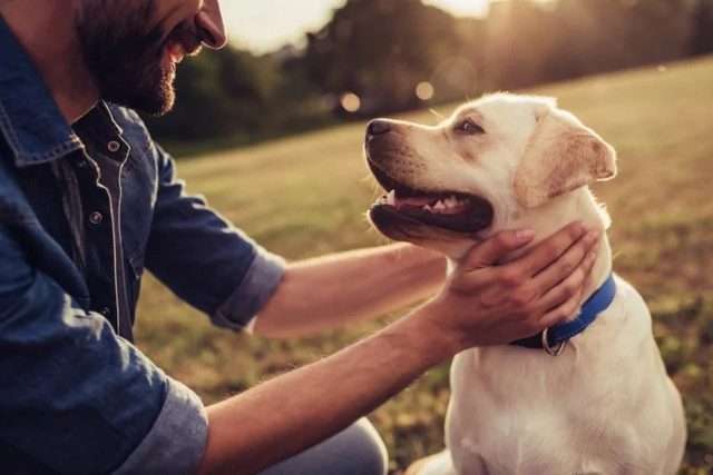 How to Be an Eco-Friendly Dog Owner featured image
