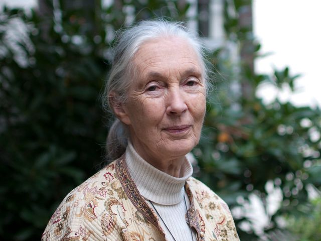 Jane Goodall To Open Asia's First Conservation Elementary School In Taipei featured image