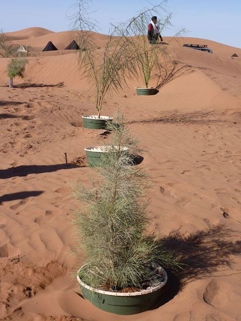 Groasis Waterboxx: Growing trees in the desert is now possible featured image