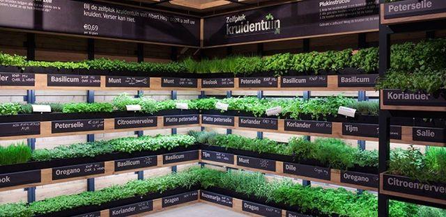 Supermarket Herb Gardens: Less Waste, Better Taste featured image