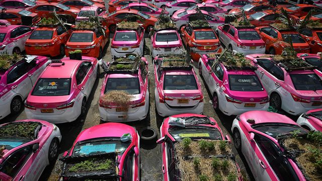 Thai taxi company turns its idle cars into vegetable gardens featured image