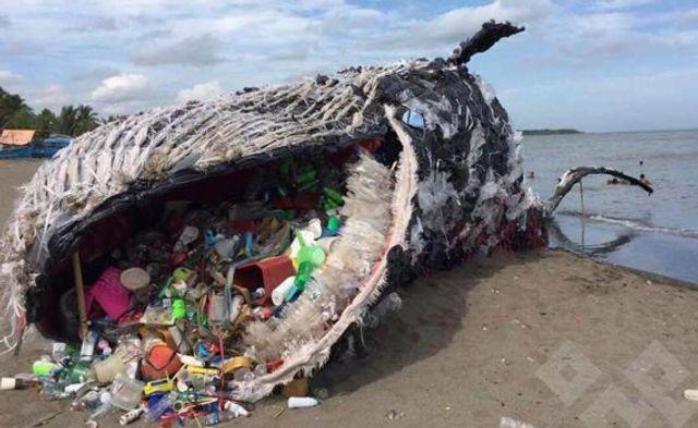 Las amenazas que sufren los océanos siguen sin solución y alterando los ecosistemas featured image