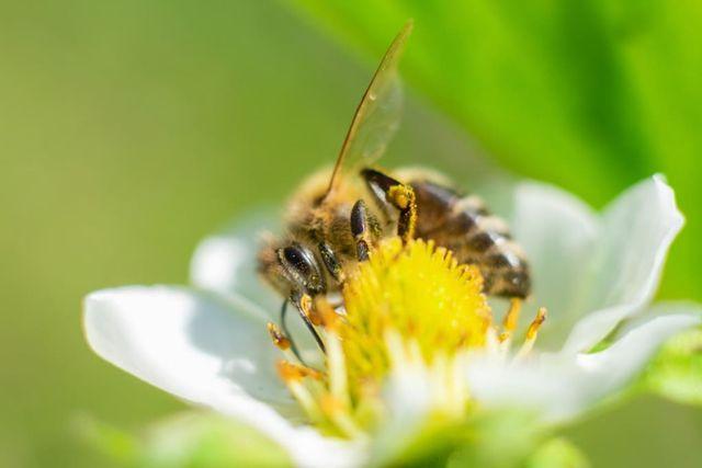 World Bee Day, la Giornata mondiale delle api featured image