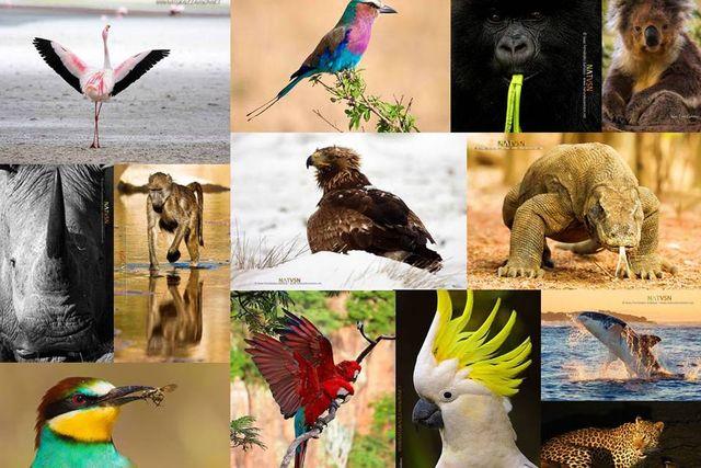 22 de Mayo - Día Internacional de la Diversidad Biológica featured image